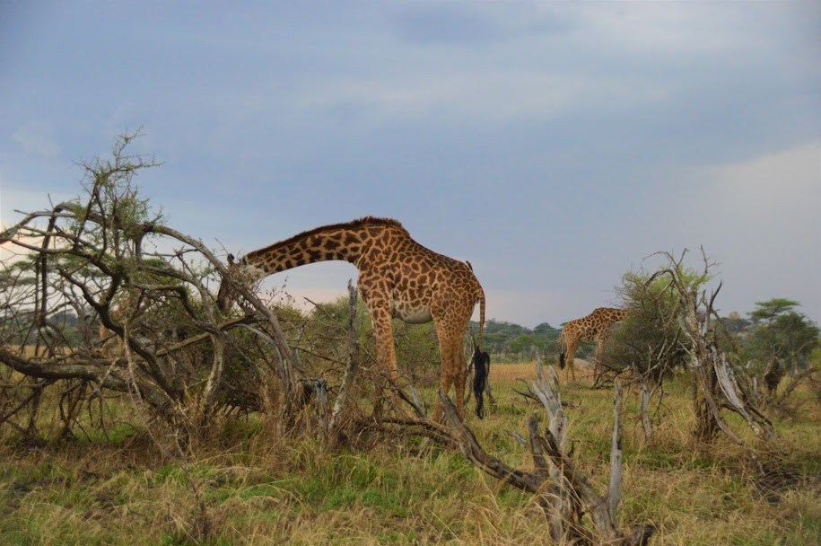 Bramwel Safaris